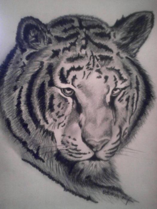 Shere Khan by Vanesa.S